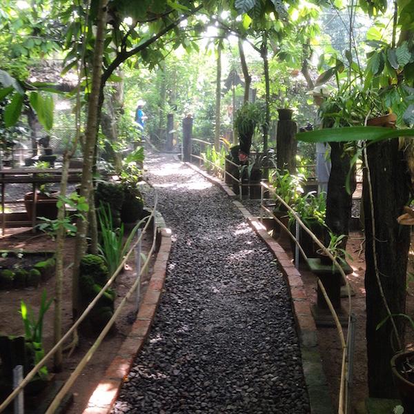 Kopi Luwak Farm in Bali