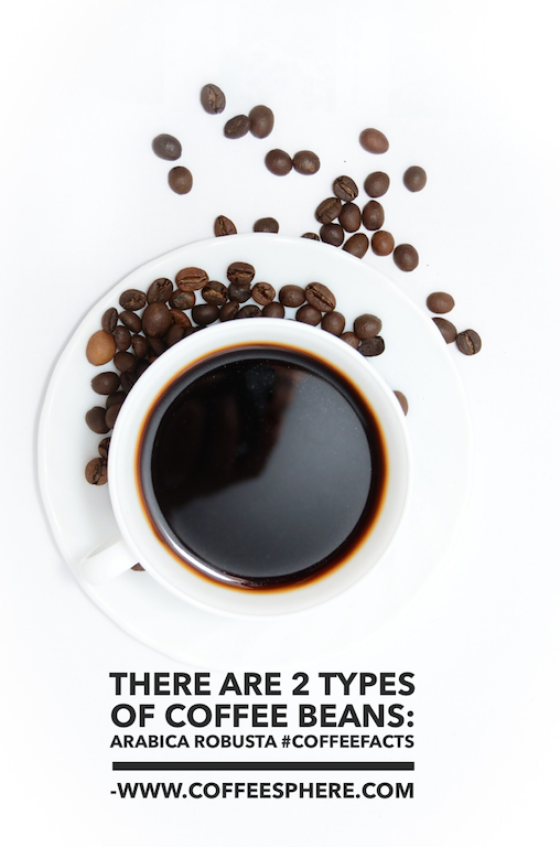 There are 2 types of coffee beans - Arabica and Robusta. Robusta is more caffeine and more bitter than Arabica.
