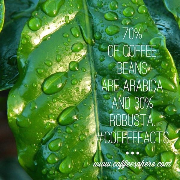 70% of coffee beans are Arabica and 30% Robusta.