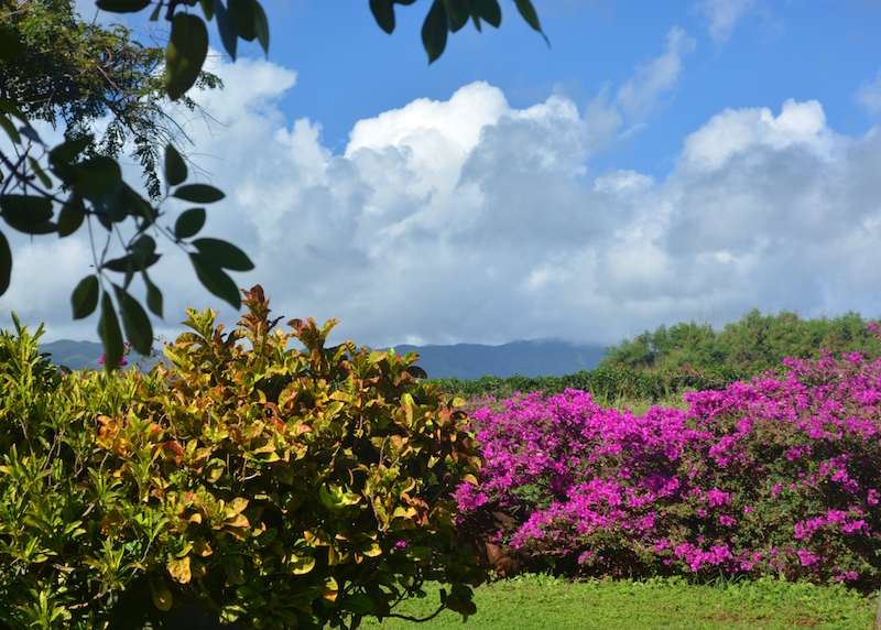 Grounds of Kauai Coffee Company