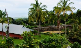 Kona Coffee from Hawaii's Verdant Valleys and Volcanoes