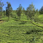 Drinking Coffee in Sri Lanka, a Tea Loving Country