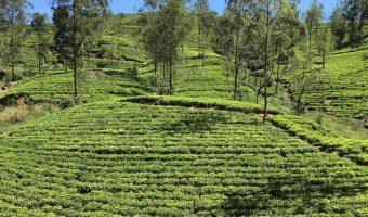 Drinking Coffee in Sri Lanka, a Tea Loving Country