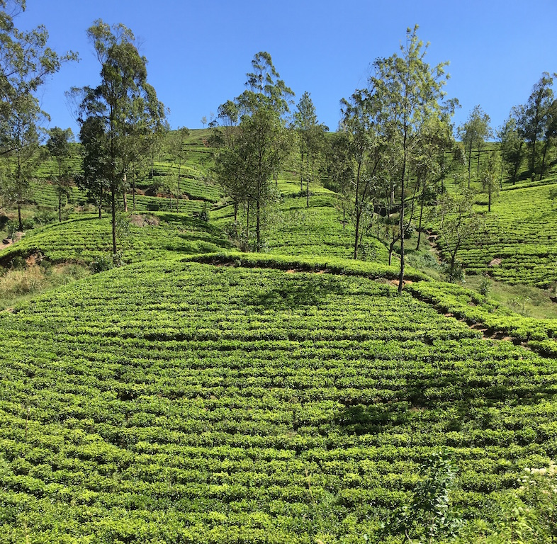 Drinking Coffee in Sri Lanka, a Tea Drinking Country